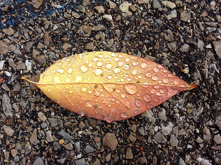 Fall leaf texture color photo