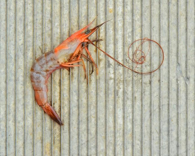 Shrimp dock fishing seafood bait  photo