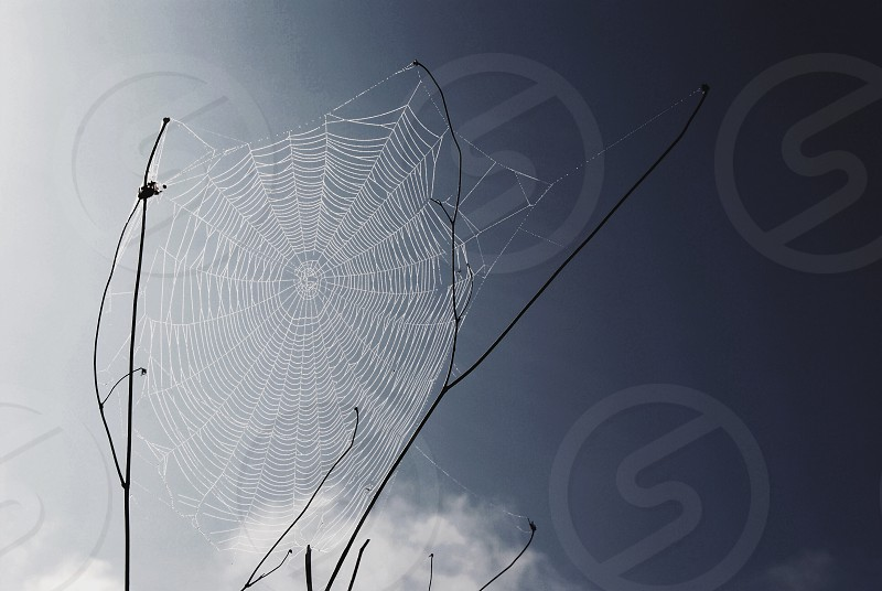spider web on plant photo