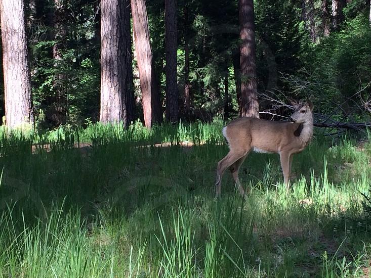 brown buck on grass during daytime photo