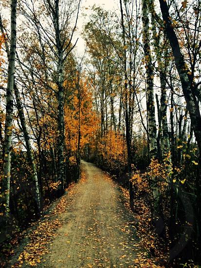 Finnish Autumn photo