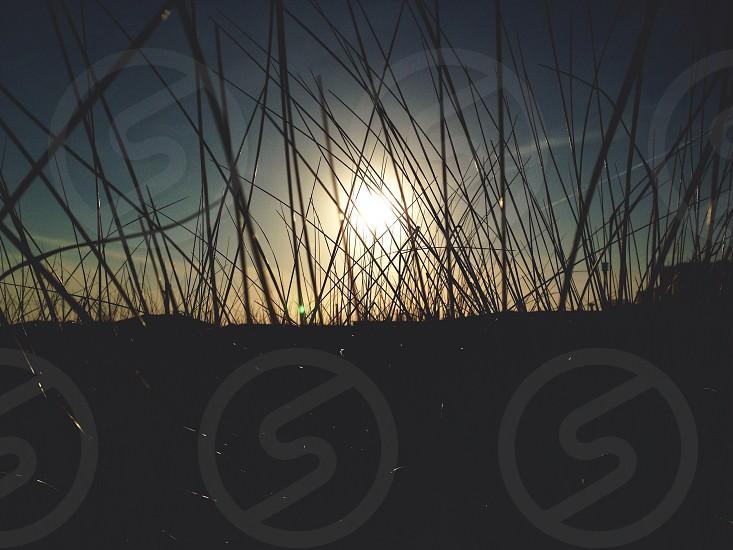 shrub silhouette view  photo