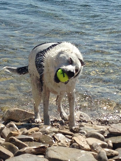 Happy as a dog with a ball!  photo