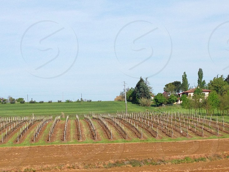 brown field with white posts in rows photo