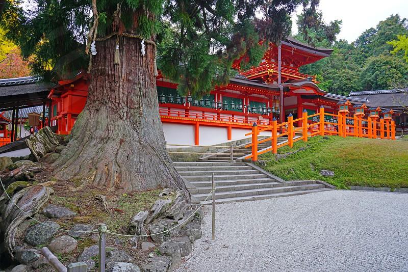 The Kasuga-taisha shrine in Nara Japan photo