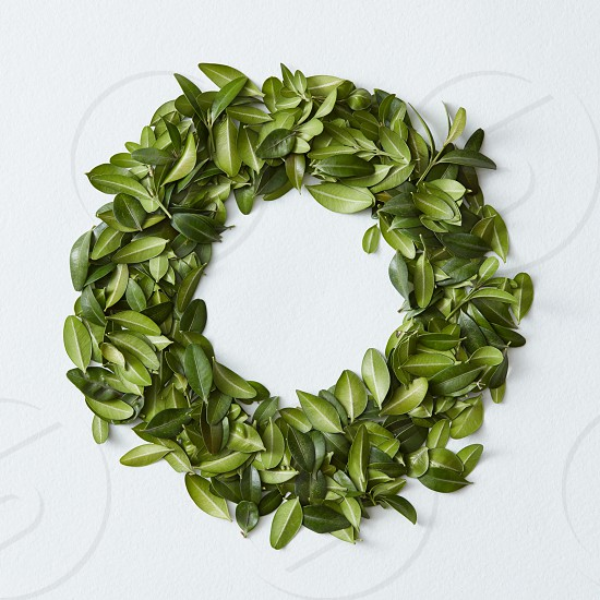 Green leaves arranged in round shape on white background photo