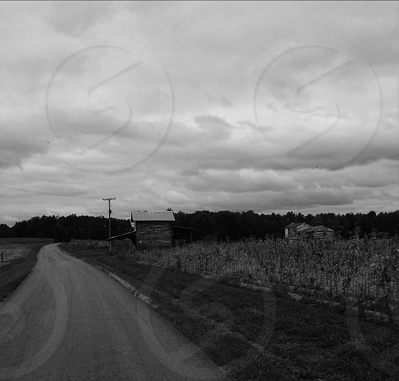 Old country road in black & white. photo