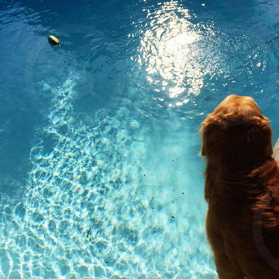 dog near water photography photo