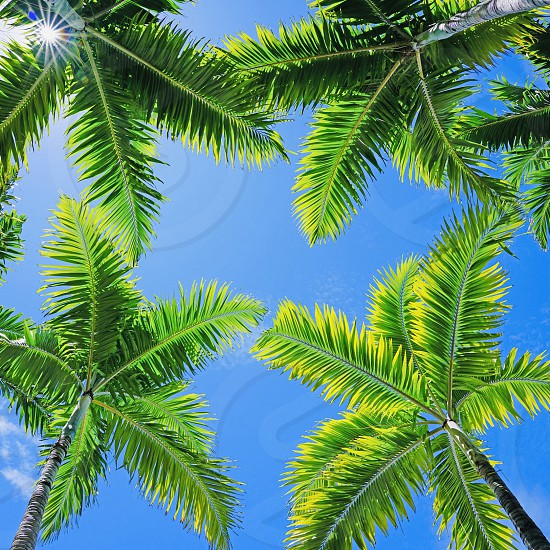 Green Palm tree tropical Palm tree sky nature relax vacation  photo