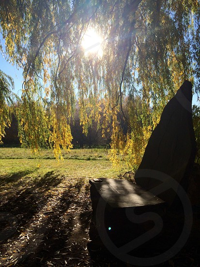 Willow tree chair photo