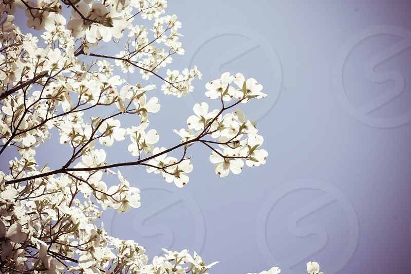 sky flowers blossoms photo