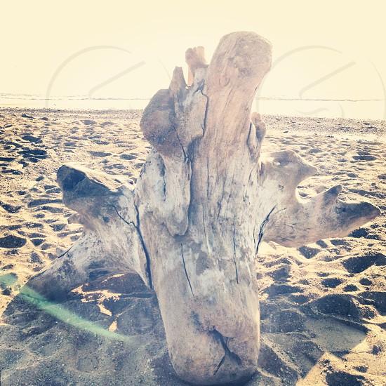 white tree trunk on a beach photo
