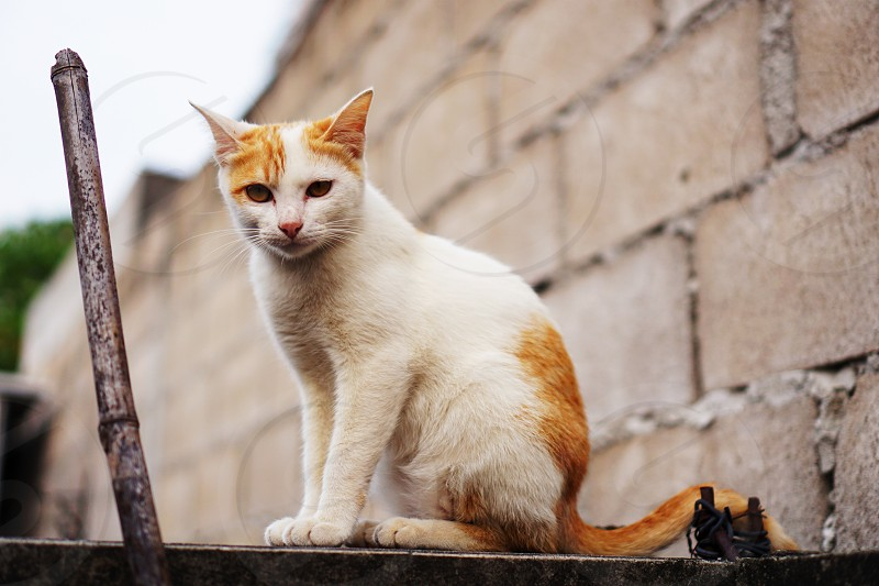 portrait of cute cat looking on wall photo