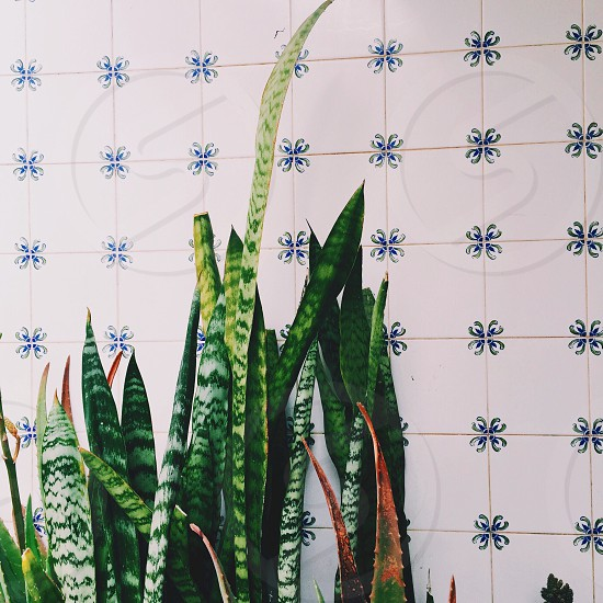 Lagos Portugal Tiles Plants Small Town Wanders March Travel photo