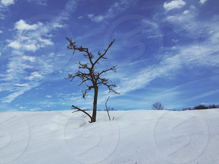 dried tree in the middle of snow covered field photo
