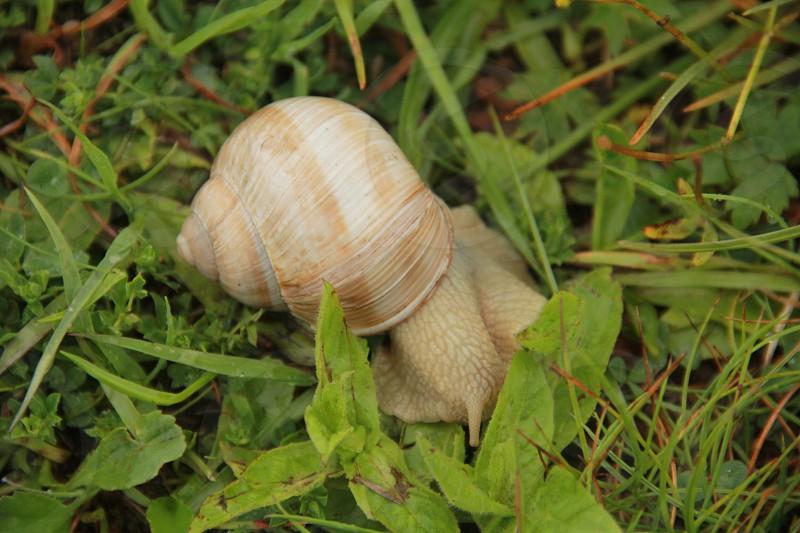 beige snail on green grass photo