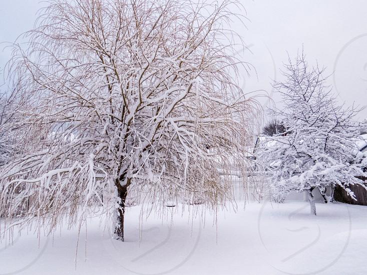 Backyard Winter Scene  photo