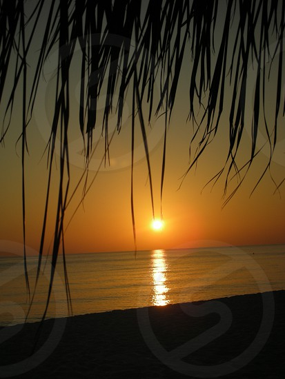 cocnut tree leaf sunset beach photo photo