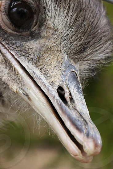 grey bird photo