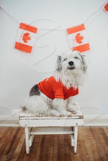 Dog Canada  photo
