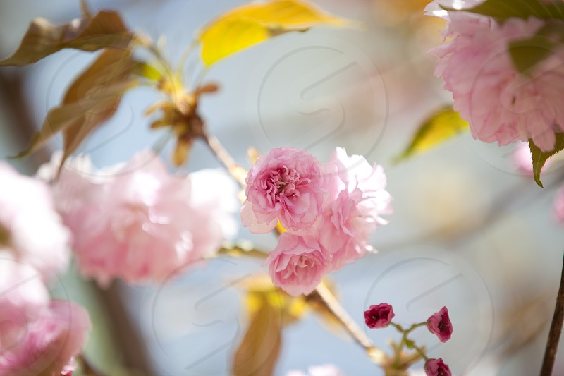 pink flowers in tilt lens photo
