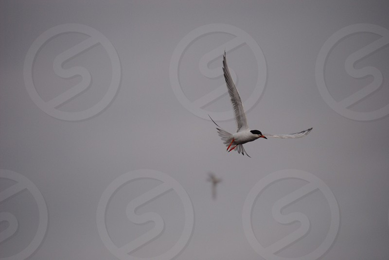 white and black bird flying photo