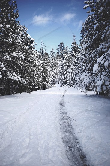 pathway on snow covered ground photo