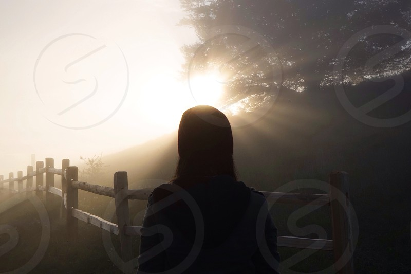woman silhouetted near misty trees portrait photo