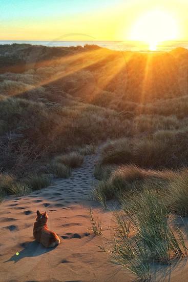 brown and white short haired medium dog lying on sand facing sunrise photo