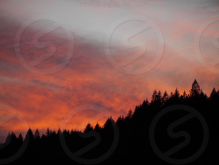 Sunset behind tree line photo