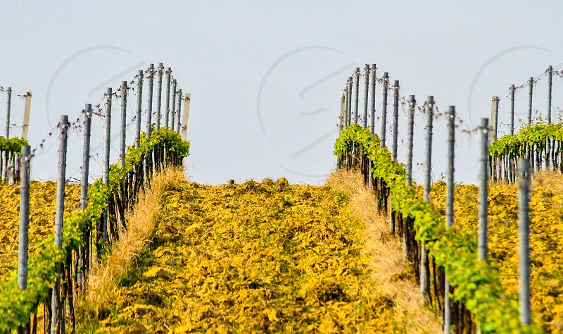 Countryside vineyard italy Tuscany green photo