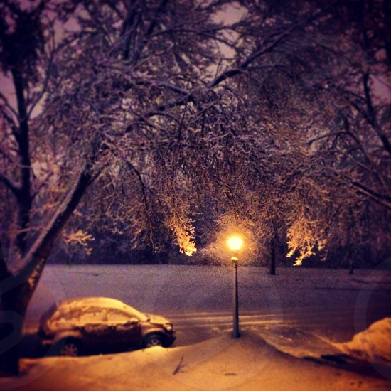 black car covered with snow parked on road near lamp post under tree at night photo