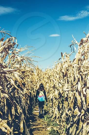 Corn maze🔆 photo