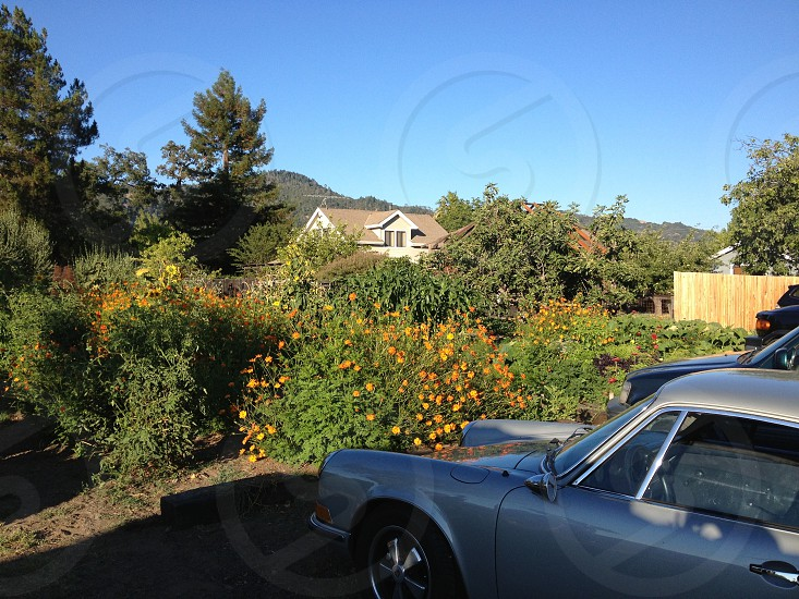 3 cars in driveway photo