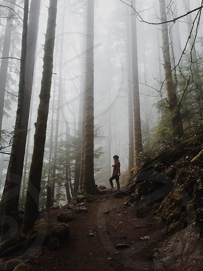 woman in red coat standing on forest road surrounded with tall trees and mist photo