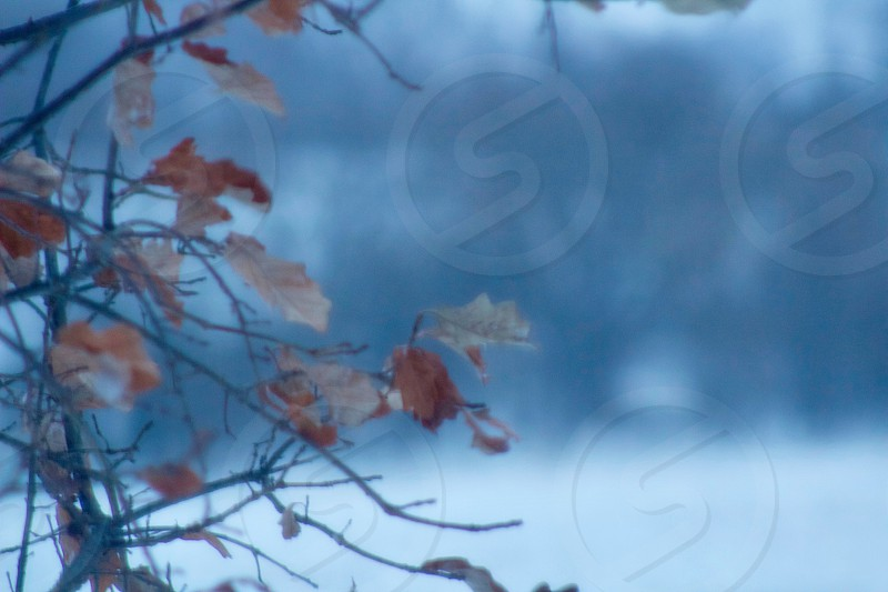Closeup of sparse tree branches against a blurred wintery landscape of trees room for copy  photo