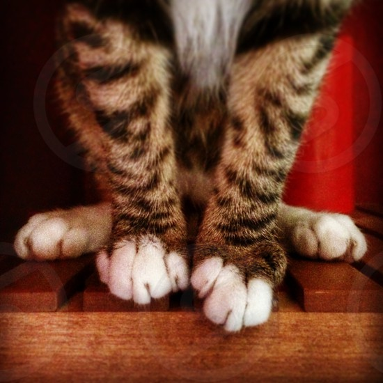 Cat paws feet fur stripes striped color photo