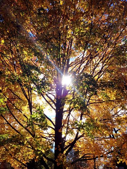Ray of light trees fall foliage  photo