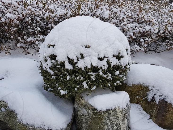 starting of winter photo
