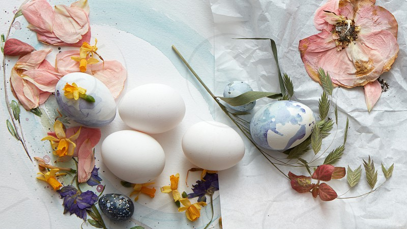 Creative easter background for a post card with colored eggs and dried flowers rose petals on white and rumpled paper flat lay photo