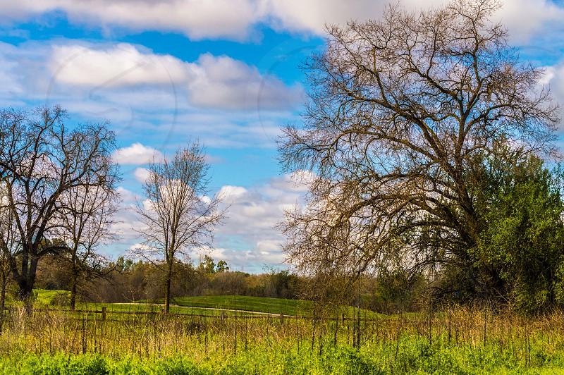 Springtime Northern California photo
