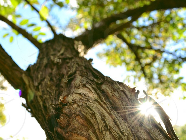 brown tree trunk and green leaves photo