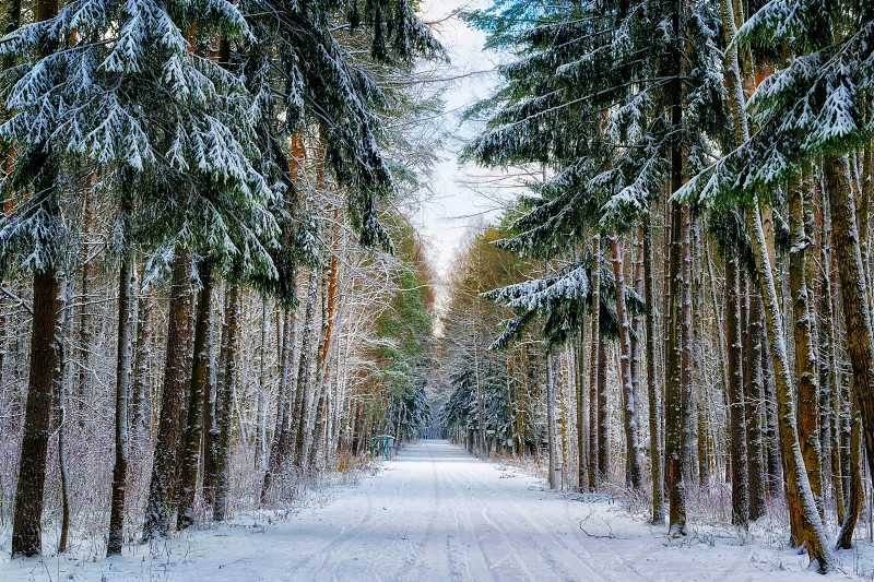 landscape photo of road covered by between pinetrees during daytime photo