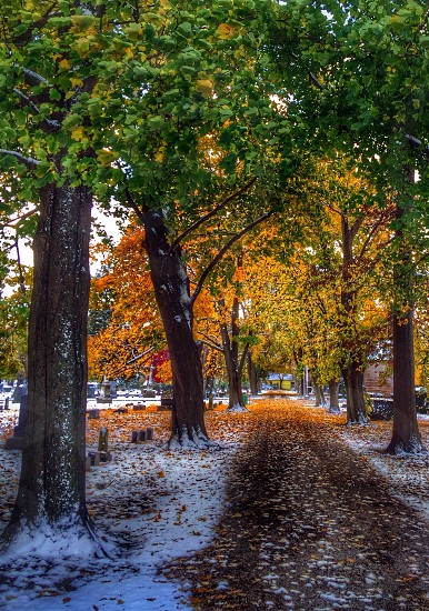 view of a road with tree's in fall photo