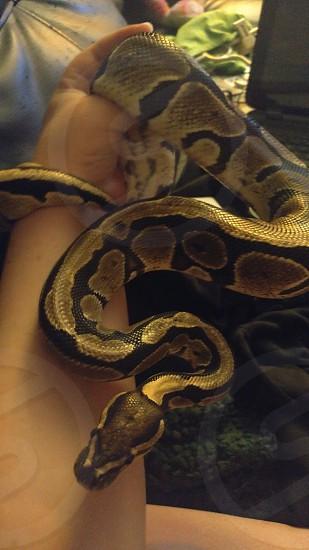 Snake Bracelet Exotics Scaley Child photo