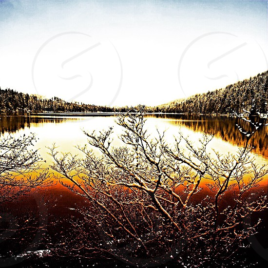 lake with snowy trees photo