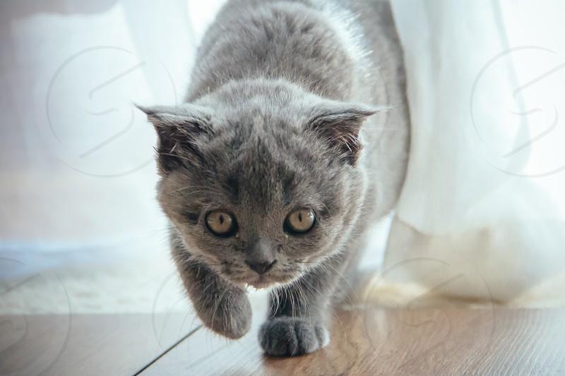 Cute kitten walking towards camera photo