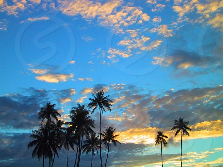 coconut tree silhouette photo