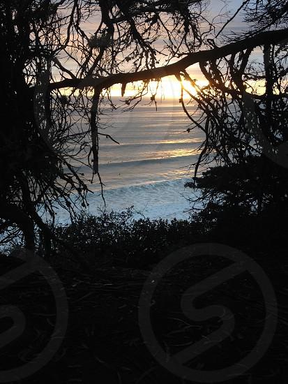 Trees sunlight sunlight through trees sunset waves surfing ocean beach surf photo