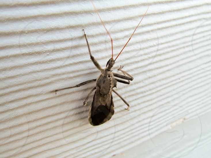 Insect bug photo